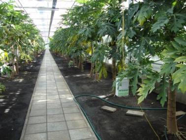В «умной» теплице обеспечено поддержание оптимального микроклимата для выращиваемых растений