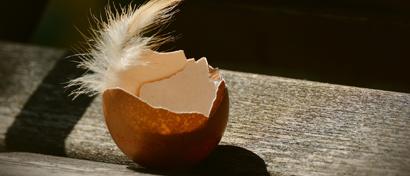 Создана быстрая память нового поколения из яичной скорлупы
