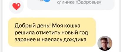 «Яндекс» запустил сервис для лечения котиков в интернете