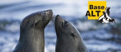 ALT Linux получила патчи против «чипокалипсиса»