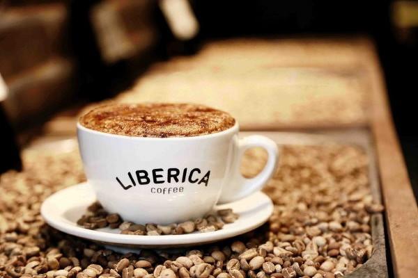 liberica600.jpg