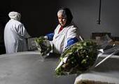 Пищевая промышленность: ИТ-стабильности не будет