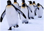 Linux: победное шествие началось?