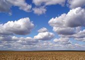 «Облака» придут в медицину из регионов