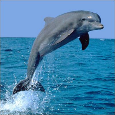 Существует отряд водных млекопитающих
