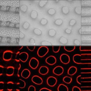 Ученые создали простой мимикрирующий камуфляж