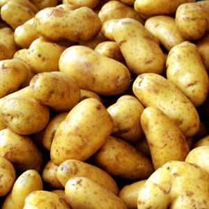 """Отредактированная картошка """"взорвет"""" рынок продуктов питания"""