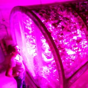 Светодиоды помогут накормить марсианских колонистов