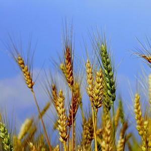 Ученые из БИ ТГУ научились добывать удобрения из воздуха
