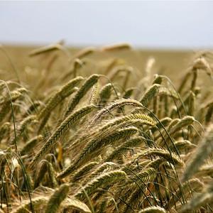 Томские ученые создали агроробота без GPS для малых фермерских хозяйств