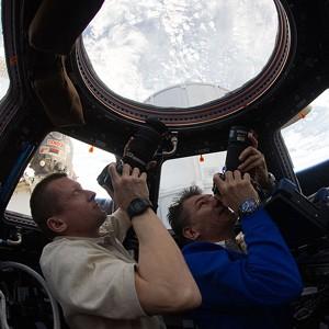 Российские ученые испытают орбитальную систему слежения за птицами