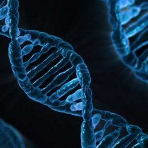 Редактирование генов будущих детей — уже через десять лет