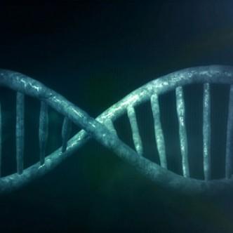 Биологические часы берегут нас от старости?