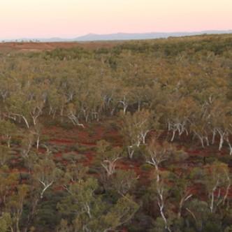 Ученые обнаружили неучтенный лес, равный по площади половине Австралии