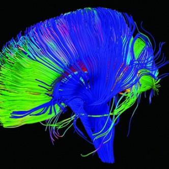 Насколько эффективно нейроанализ может предсказать поведение людей?