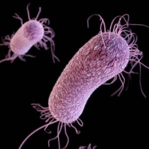 Бактерии быстро адаптируются к невесомости