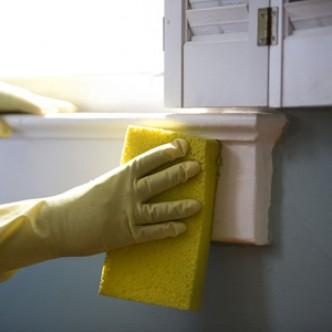 Кухонные губки – уникальный инкубатор для патогенов