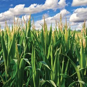 Углекислый газ снижает содержание белка в растениях