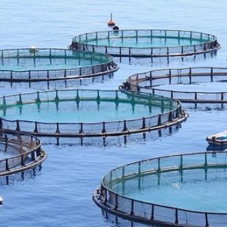 Благодаря выращиванию рыбы у человечества есть шанс избежать голода