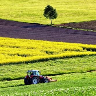 Редактирование генов может стать главным инструментом в сельском хозяйстве