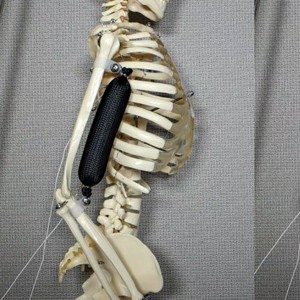 Впервые создана искусственная мышца, не требующая мощного питания