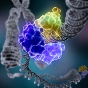 ГМ-куры могут нести яйца с лекарством от рака