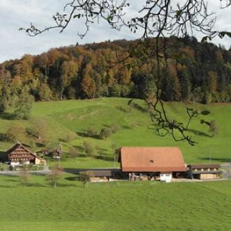 Дом с видом на лес защищает от стресса