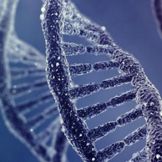 Генетики нашли способ сделать нежирную свинину