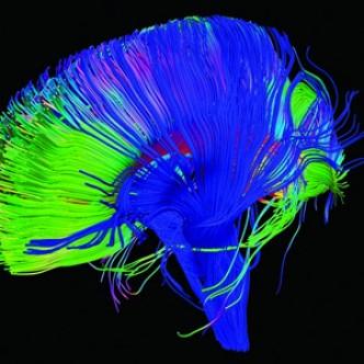 Речевые зоны мозга есть и у животных
