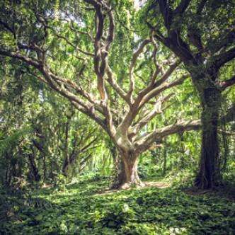 В тропических лесах резко ускорилась гибель деревьев