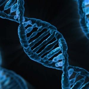 Вирус может повысить эффективность редактирования генов CRISPR