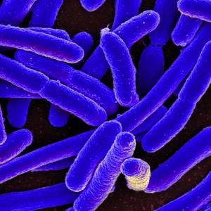 Суперштаммов бактерий становится все больше