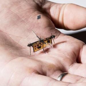 Робот-насекомое выполняет первые полеты