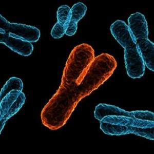 Тысячи лет назад загадочное событие резко сократило разнообразие Y-хромосом