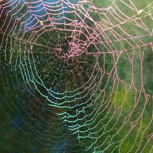 Генетики создали шелкопрядов, производящих паучий шелк