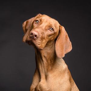 Собаки отражают уровень стресса их владельцев