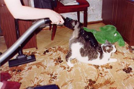 Сухим пылесосом можно почистить даже кота