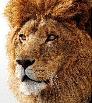 28_mac_os_x_lion[1]_70929.jpg