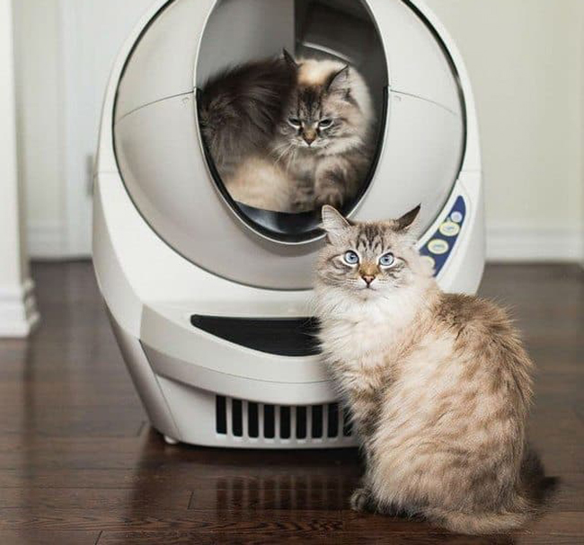 Лучшие гаджеты для домашних животных: выбор ZOOM
