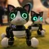 Зоопарк на микросхемах: почему роботы так похожи на животных?
