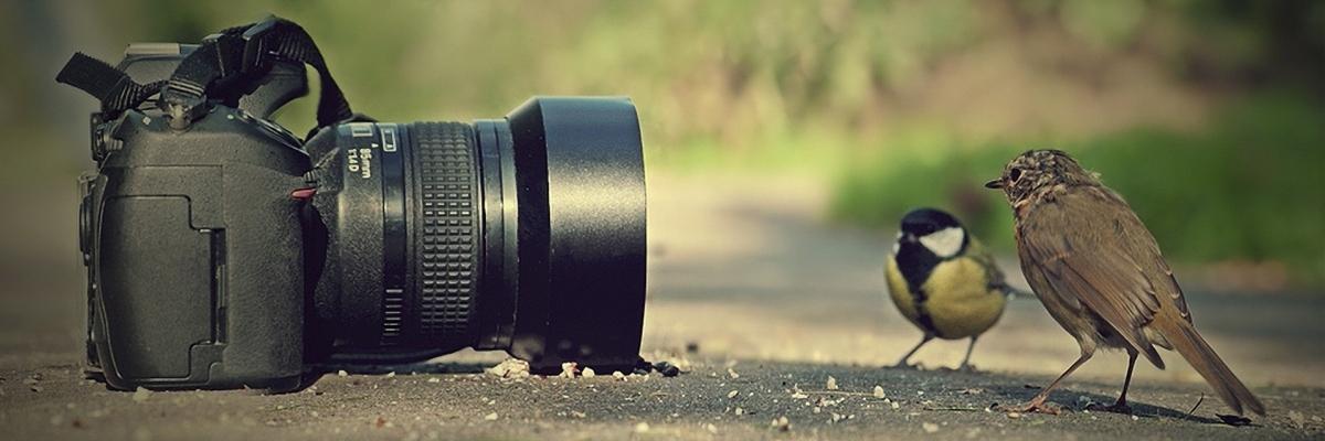 Как догнать флагман: есть ли смысл в покупке топовых фотоаппаратов?