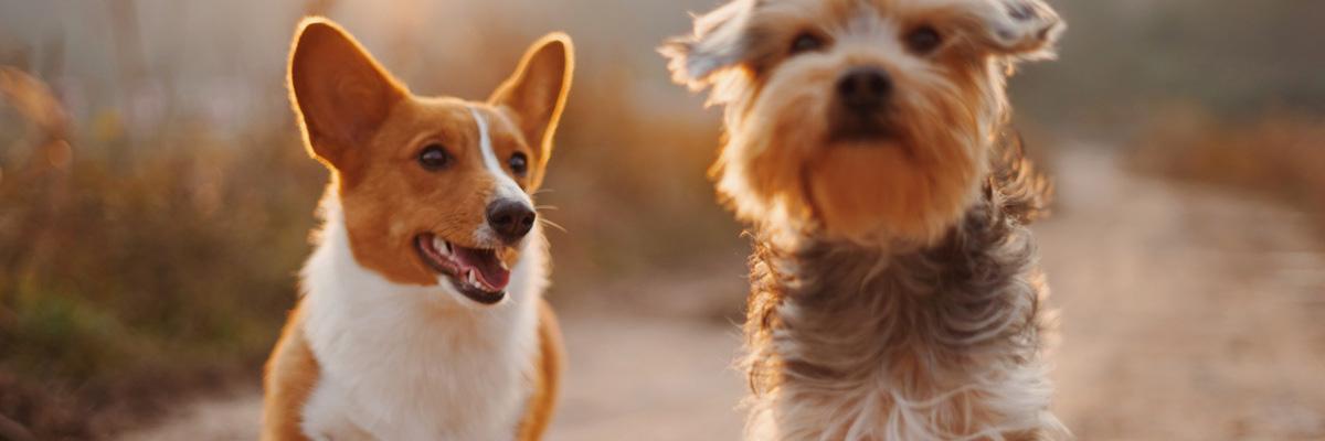 Как не потерять питомца: лучшие ошейники с GPS для животных